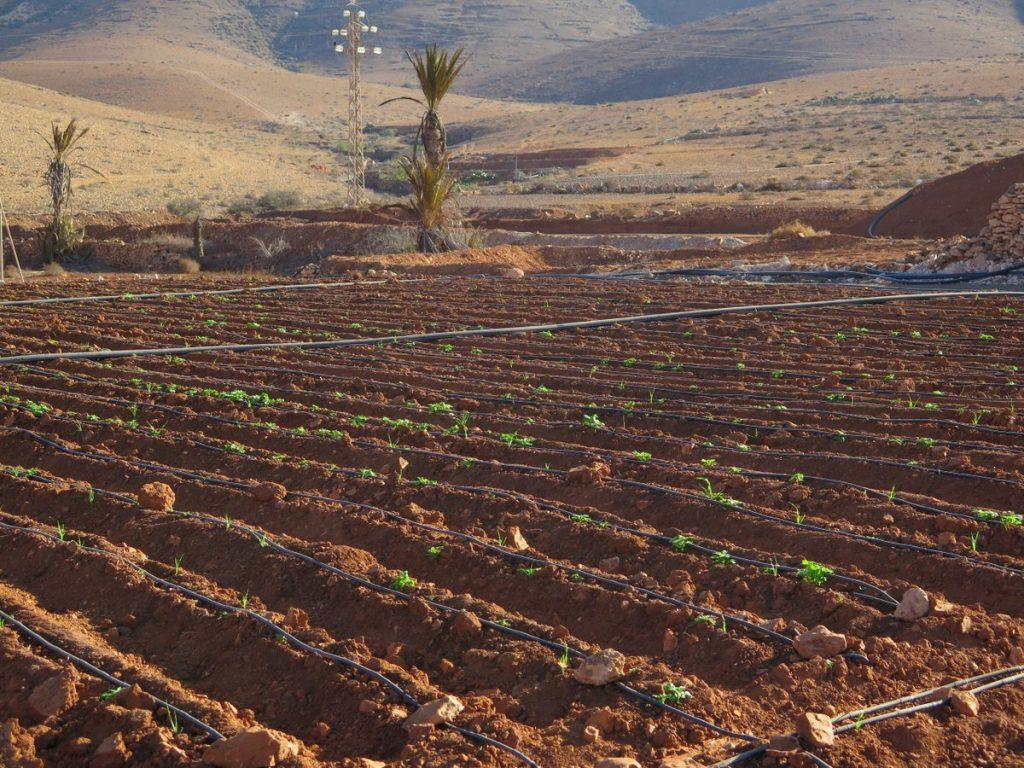 Agricultura en Canarias 2