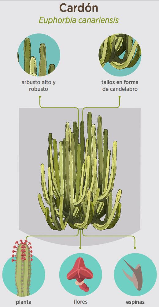 taxonomia-cardon